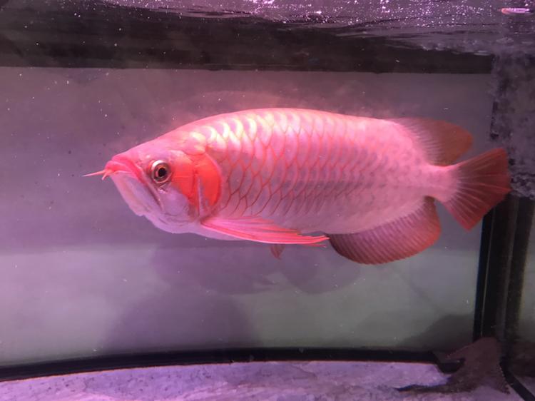 大家评价一下 西安观赏鱼信息 西安博特第3张