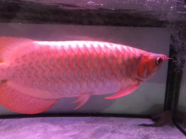 大家评价一下 西安观赏鱼信息 西安博特第2张
