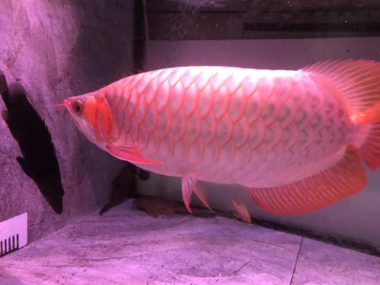大家评价一下 西安观赏鱼信息 西安博特第7张