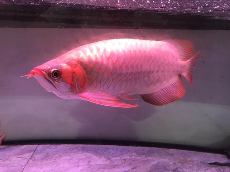 大家评价一下 西安观赏鱼信息 西安博特第5张
