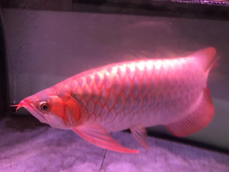 大家评价一下 西安观赏鱼信息 西安博特第6张