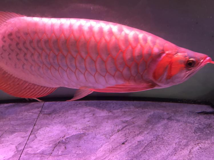 大家评价一下 西安观赏鱼信息 西安博特第9张