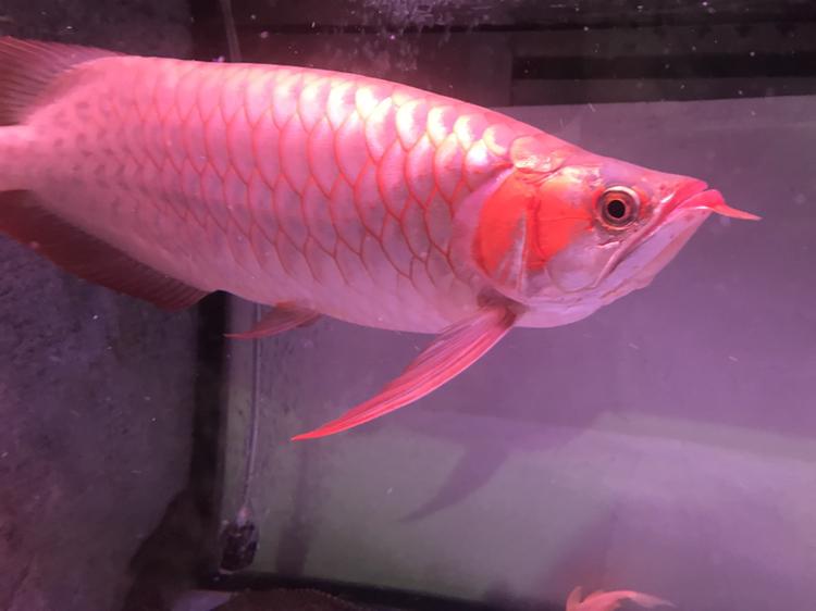 大家评价一下 西安观赏鱼信息 西安博特第8张