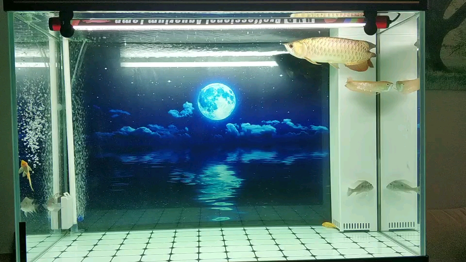 换了个背景 西安龙鱼论坛 西安博特第1张