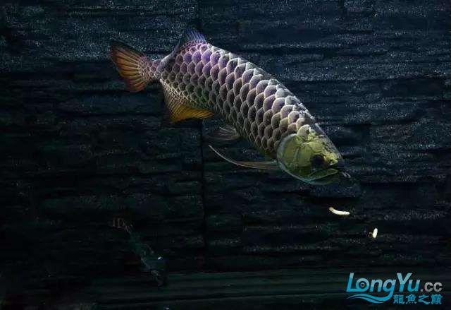 被这颜值迷住又骗我买鱼 西安观赏鱼信息 西安博特第1张