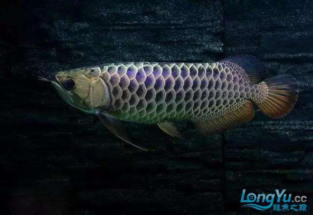 被这颜值迷住又骗我买鱼 西安观赏鱼信息 西安博特第5张