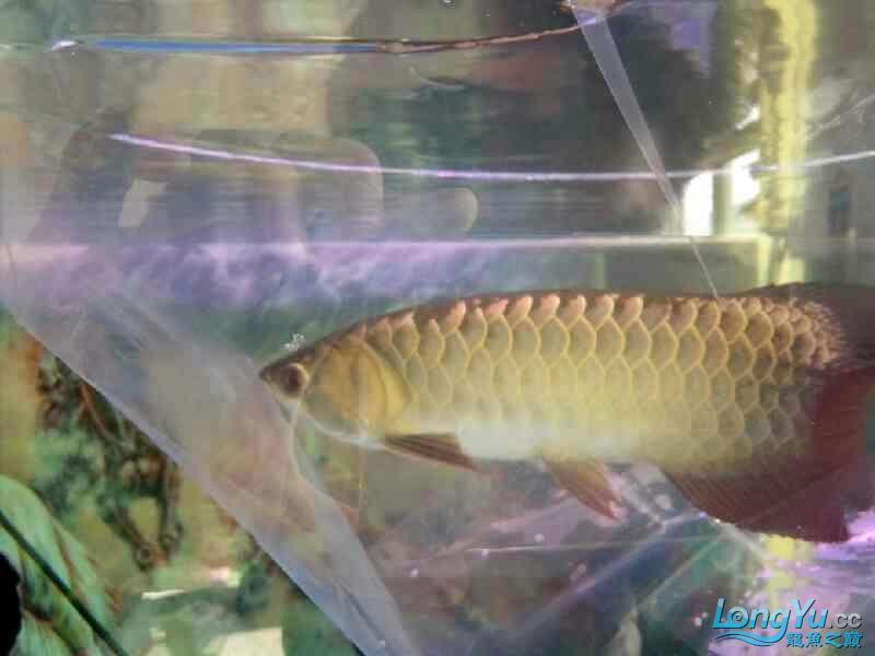 西安观赏鱼批发混养继续加鱼 西安观赏鱼信息 西安博特第1张