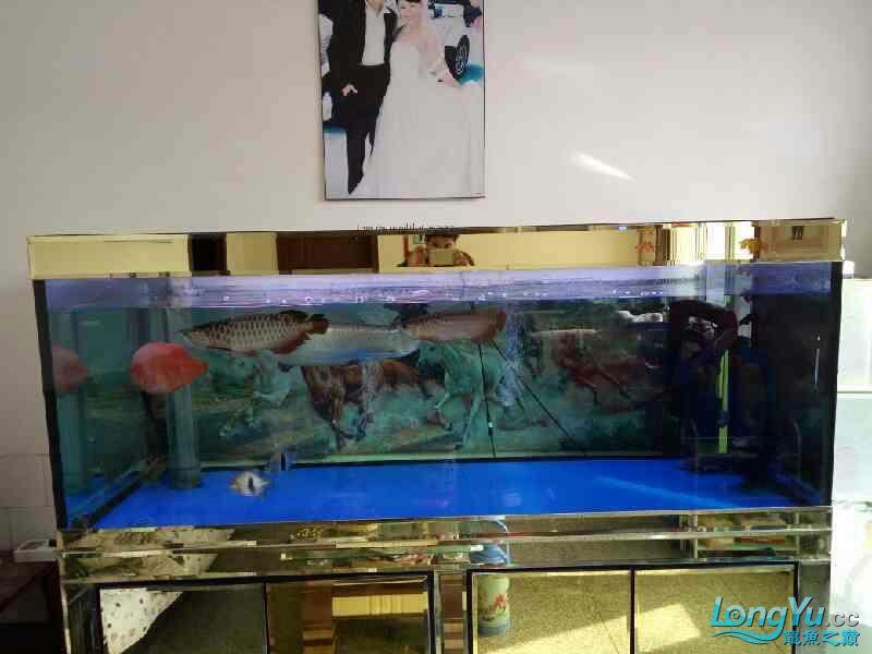 西安观赏鱼批发混养继续加鱼 西安观赏鱼信息 西安博特第3张