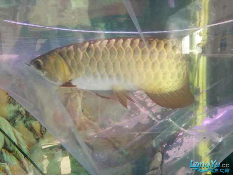 西安观赏鱼批发混养继续加鱼 西安观赏鱼信息 西安博特第2张