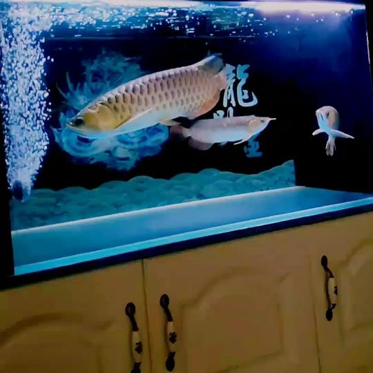 开喂 西安龙鱼论坛 西安博特第1张