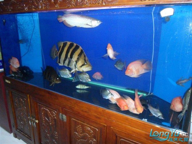 混养 西安水族馆微信有点乱 西安龙鱼论坛 西安博特第3张