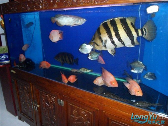 混养 西安水族馆微信有点乱 西安龙鱼论坛 西安博特第2张