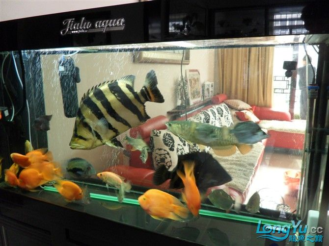 混养 西安水族馆微信有点乱 西安龙鱼论坛 西安博特第5张
