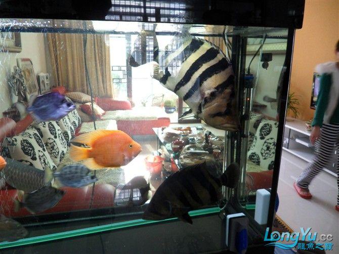 混养 西安水族馆微信有点乱 西安龙鱼论坛 西安博特第4张