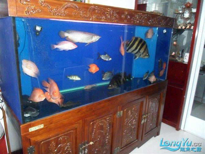 混养 西安水族馆微信有点乱 西安龙鱼论坛 西安博特第1张