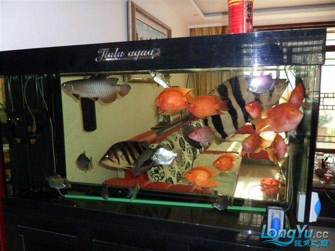 混养 西安水族馆微信有点乱 西安龙鱼论坛 西安博特第6张