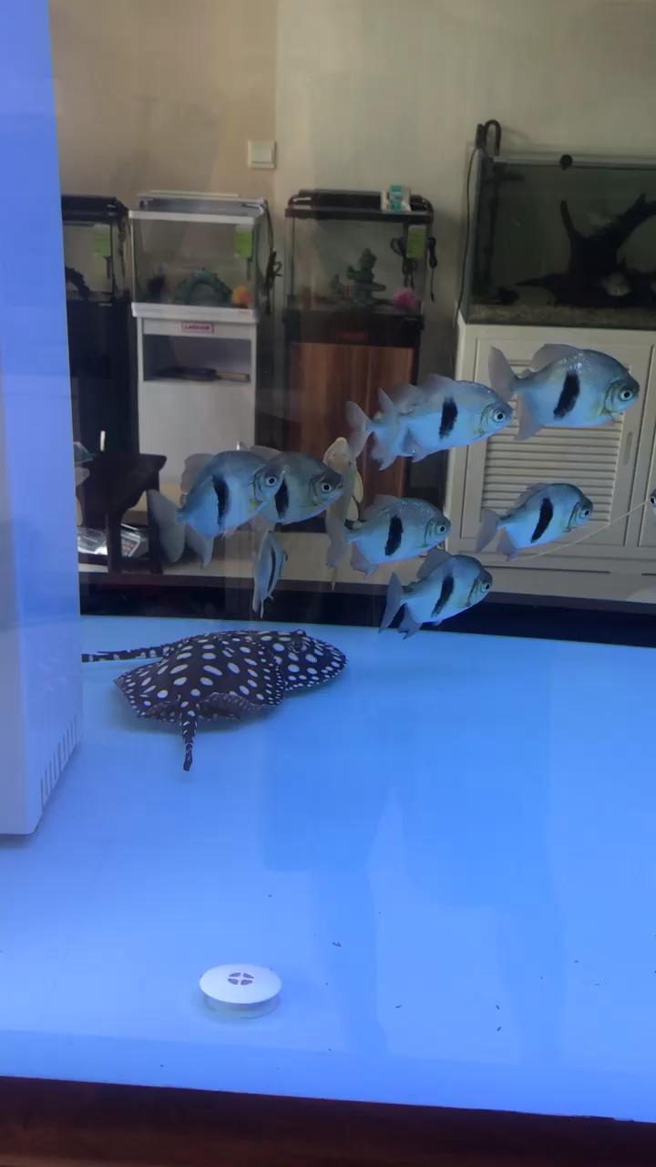 村里西安有几个花鸟市场的新人 西安龙鱼论坛