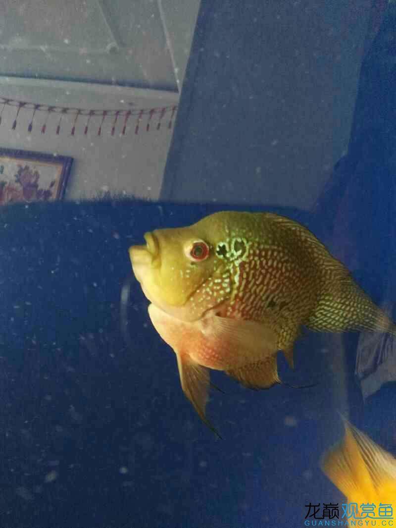 大神帮忙看看这眼睛怎么了? 西安龙鱼论坛 西安博特第2张
