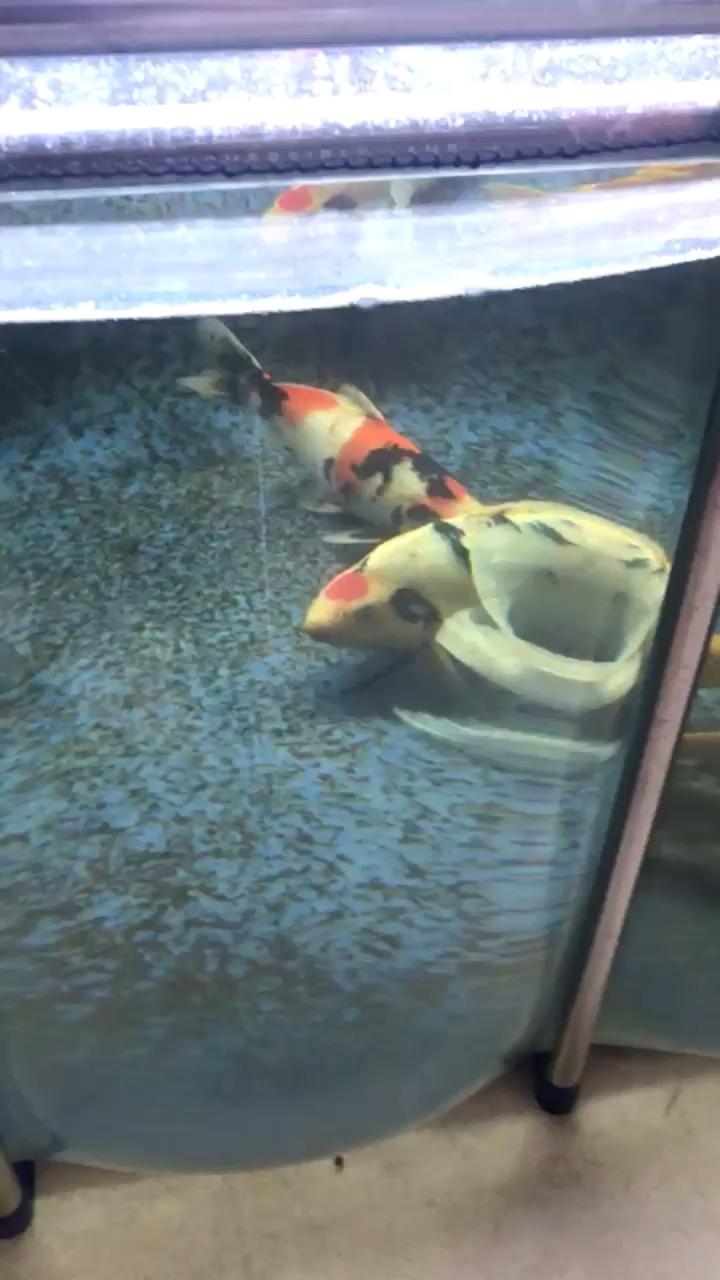 西安红龙恢复一天直接合池