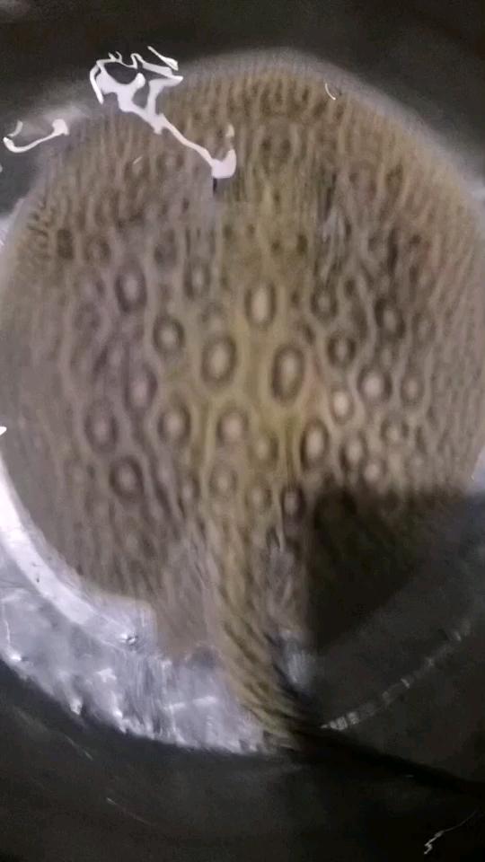 喜欢什么养【西安巴西亚鱼】什么 西安观赏鱼信息