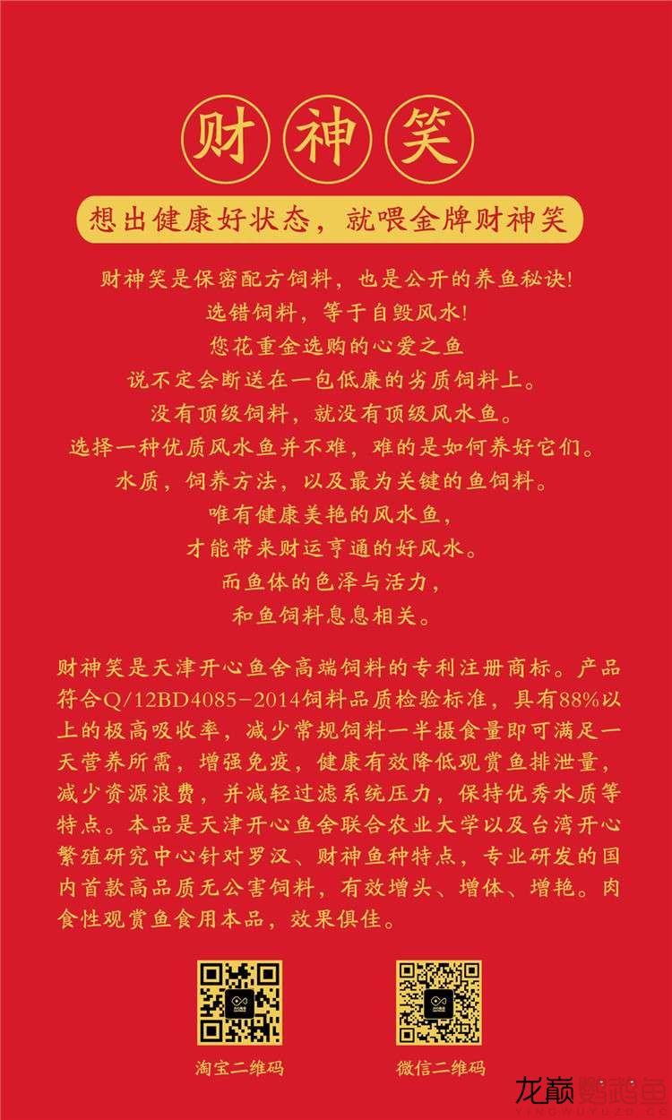 血西安罗汉鱼本买下6条台湾开心渔场噶玛兰红财神晒晒小靓照持 西安观赏鱼信息 西安博特第12张