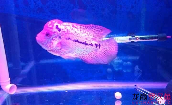 养罗日记聆听—舒克 西安观赏鱼信息 西安博特第3张