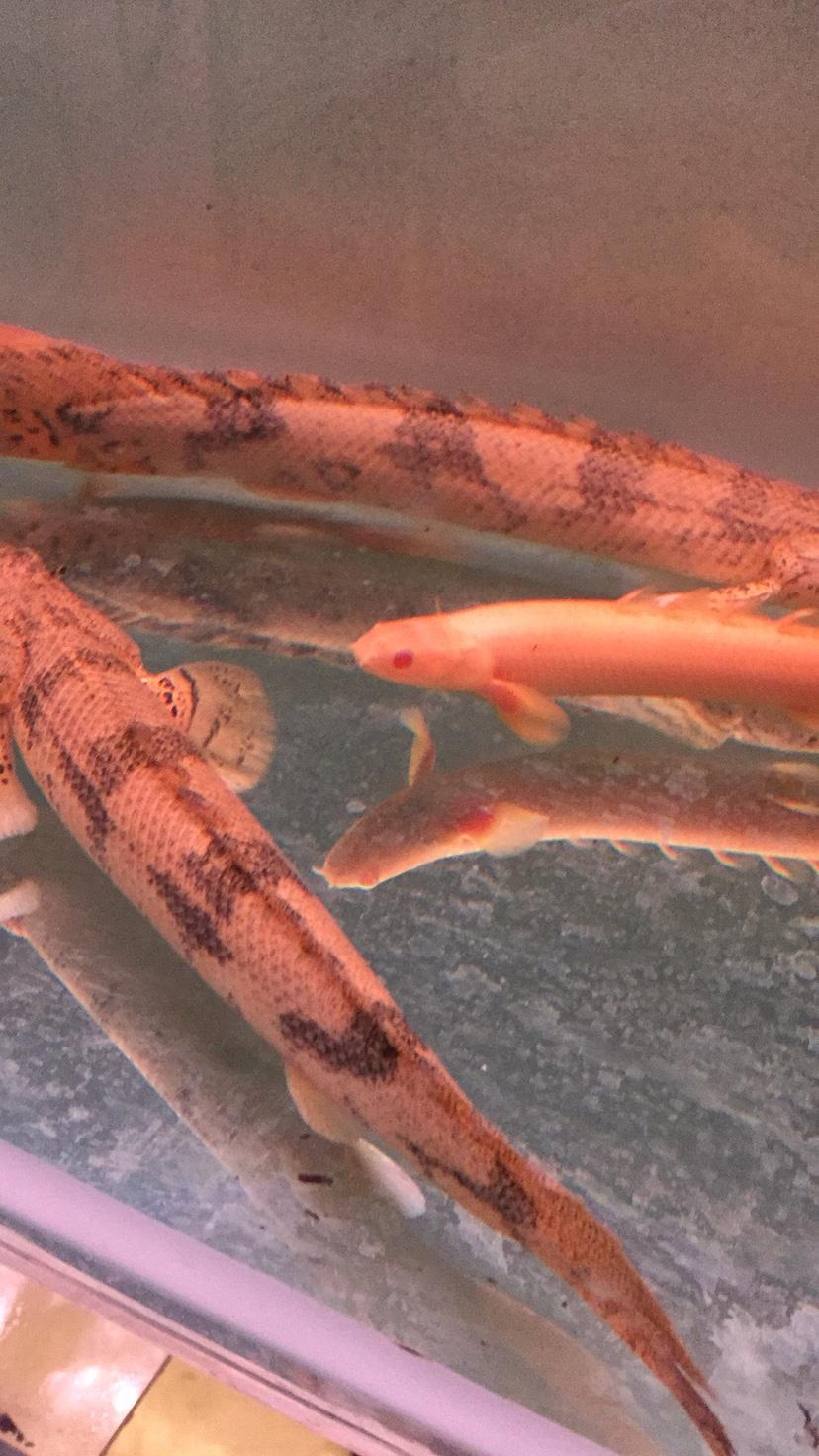 鱼儿漂亮吧 西安观赏鱼信息 西安博特第1张