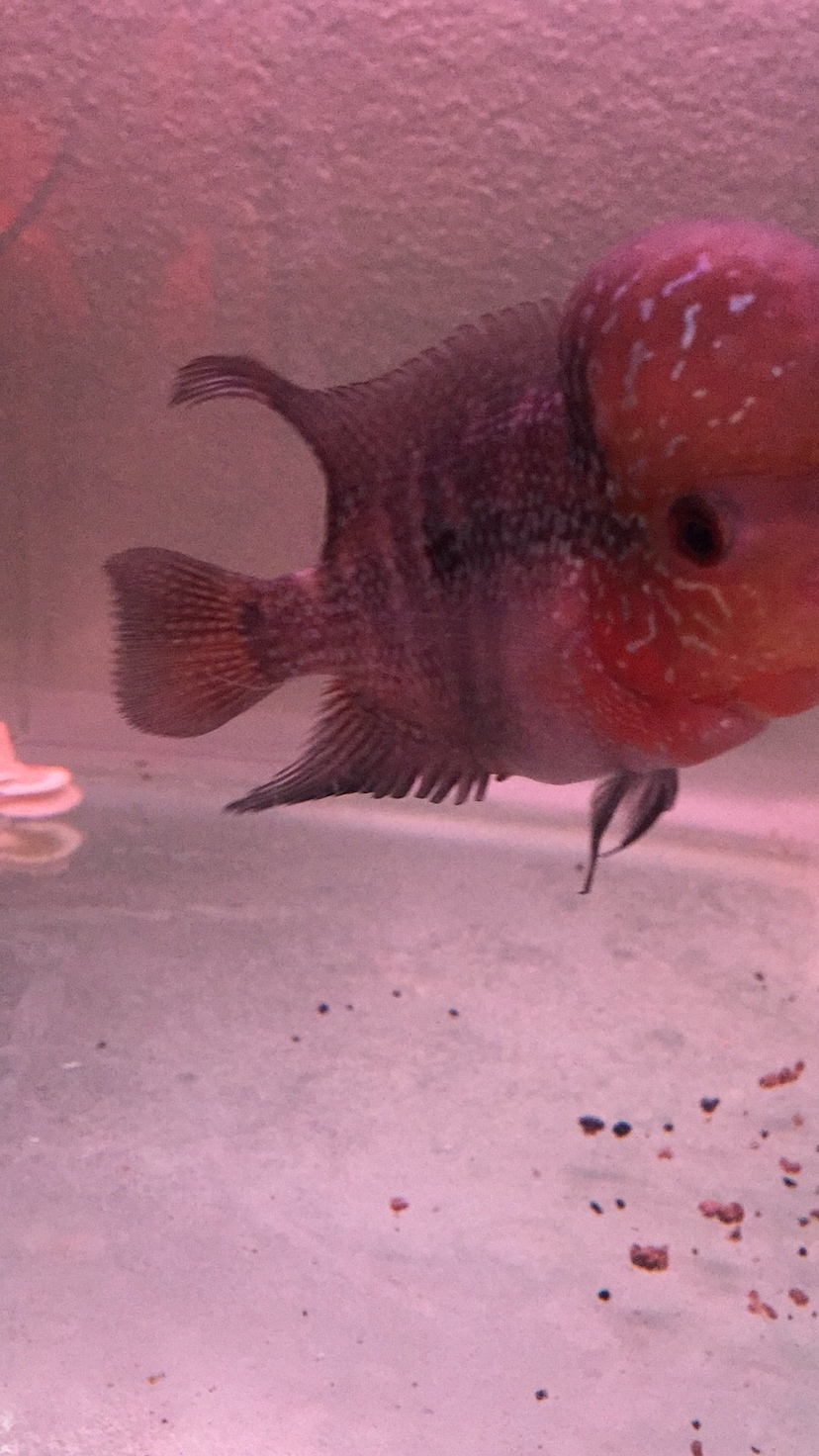鱼儿漂亮吧 西安观赏鱼信息 西安博特第3张