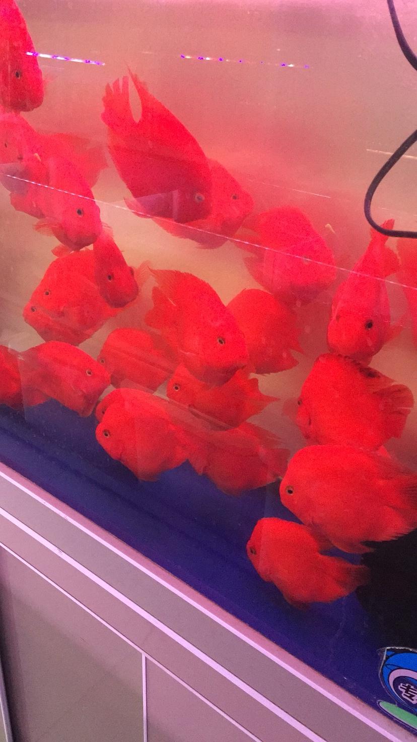 鱼儿漂亮吧 西安观赏鱼信息 西安博特第6张