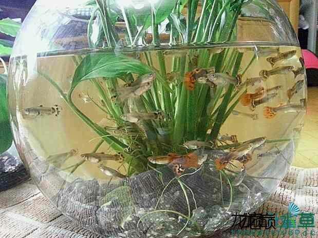 西安鱼缸代理谁知道这是什么水草啊? 西安龙鱼论坛