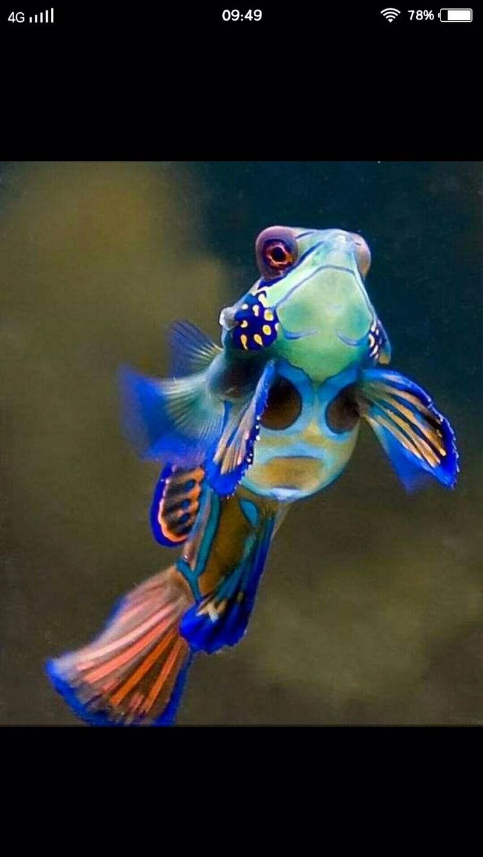 晚上看见慎得慌 西安观赏鱼信息