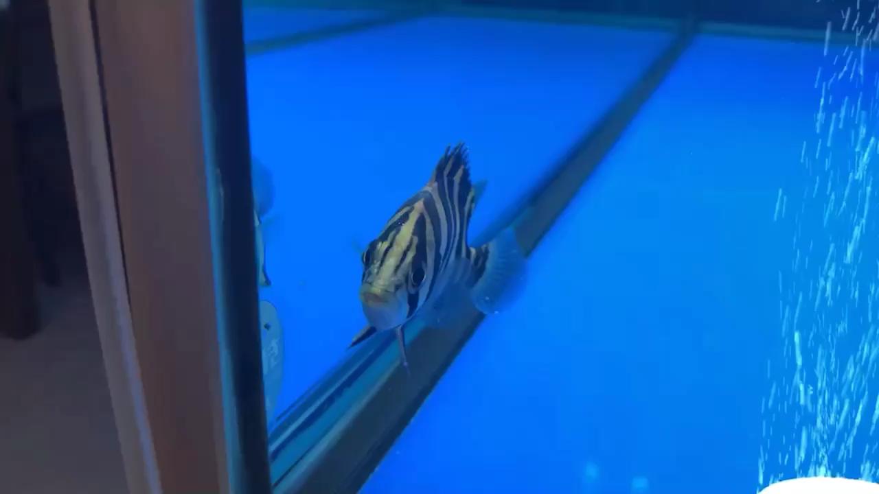 新到龙的小伙伴 西安观赏鱼信息