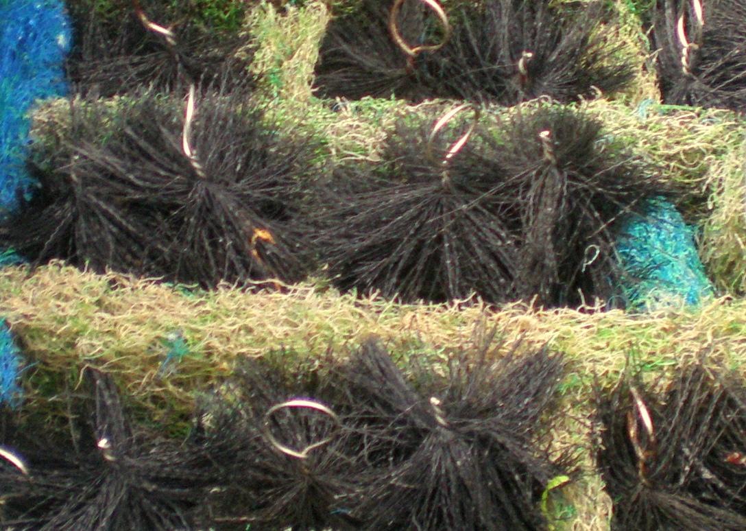 【西安大吉大利鱼】西安观赏鱼之家水族论坛小罗状态很好 西安观赏鱼信息 西安博特第3张