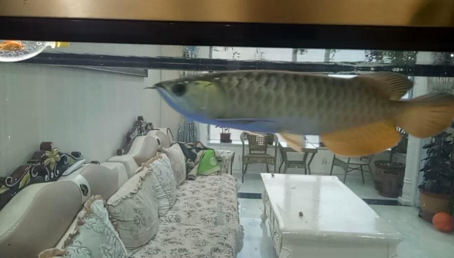 是B过还是西安布隆迪六间哪个店的最好过背 西安观赏鱼信息 西安博特第1张