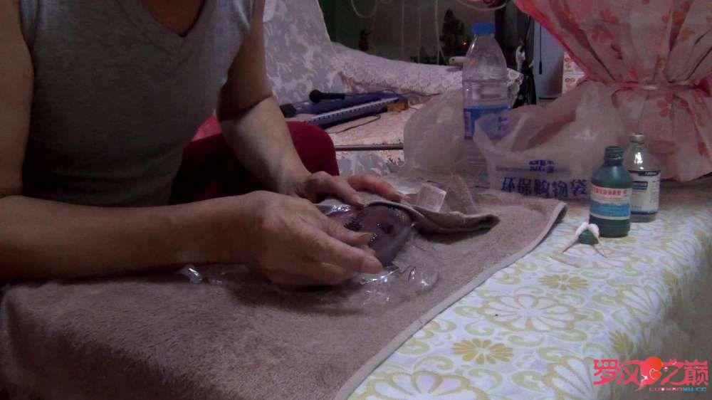 治疗罗汉鱼 西安观赏鱼信息 西安博特第7张