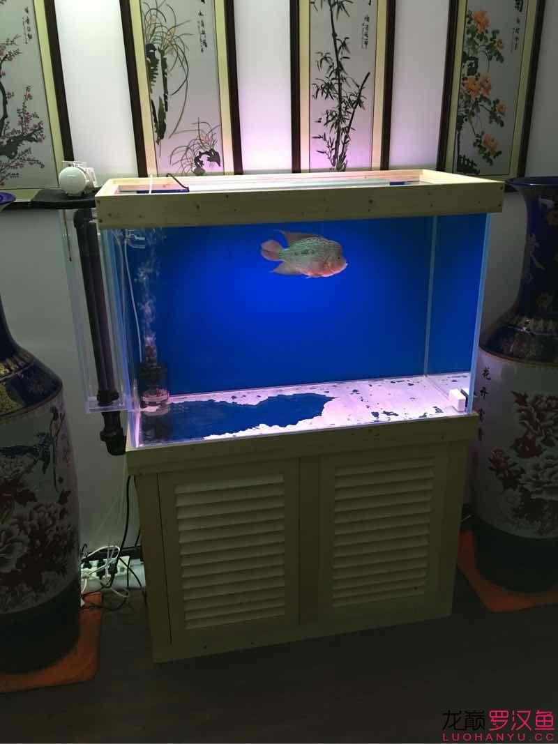 【西安白化鸭嘴鱼】小罗泰金新家介绍 西安观赏鱼信息 西安博特第2张