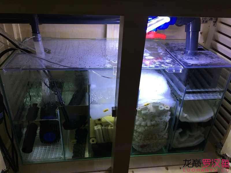 【西安白化鸭嘴鱼】小罗泰金新家介绍 西安观赏鱼信息 西安博特第5张