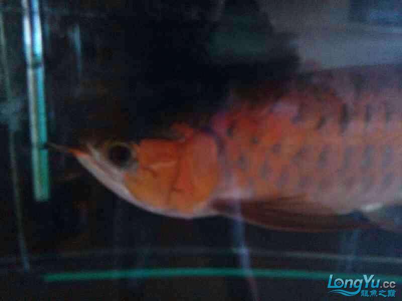 随手拍照 西安龙鱼论坛 西安博特第2张