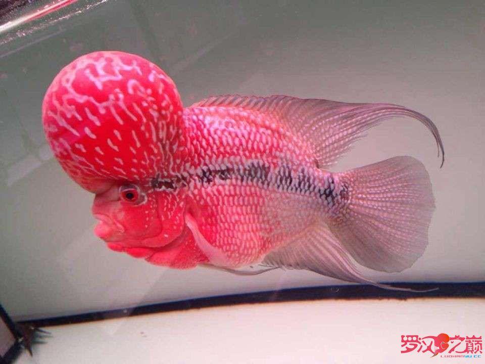 这个能上主页吗? 西安观赏鱼信息 西安博特第4张