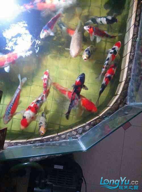西安道花鸟鱼虫市场养鱼历程 西安龙鱼论坛 西安博特第5张