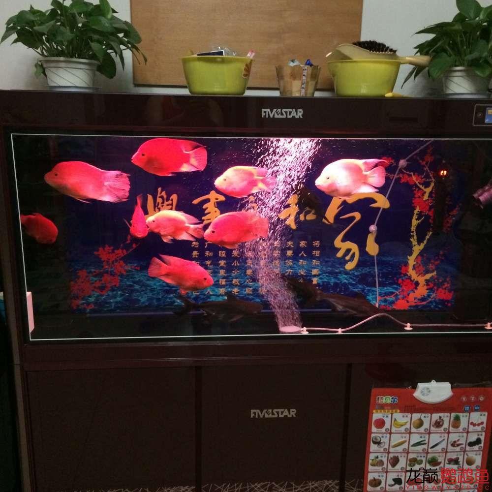 申请罗师傅+什么样的鱼饲料决定什么样的鱼西安鱼市在哪