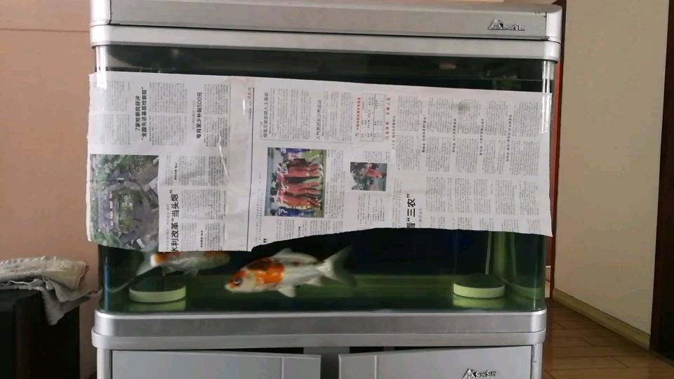 遮羞西安鱼市在哪布2锦鲤圈 西安龙鱼论坛 西安博特第1张