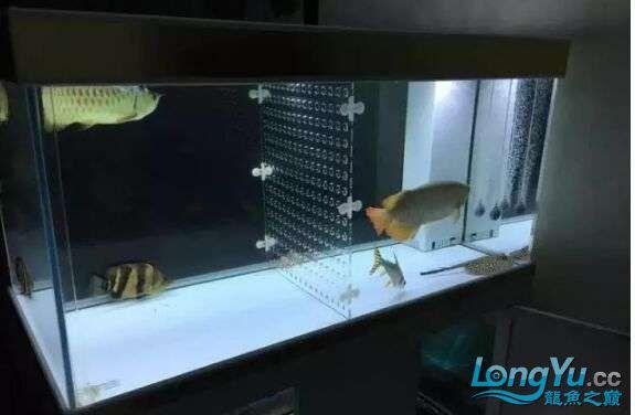 鱼趣养水机 西安龙鱼论坛 西安博特第5张