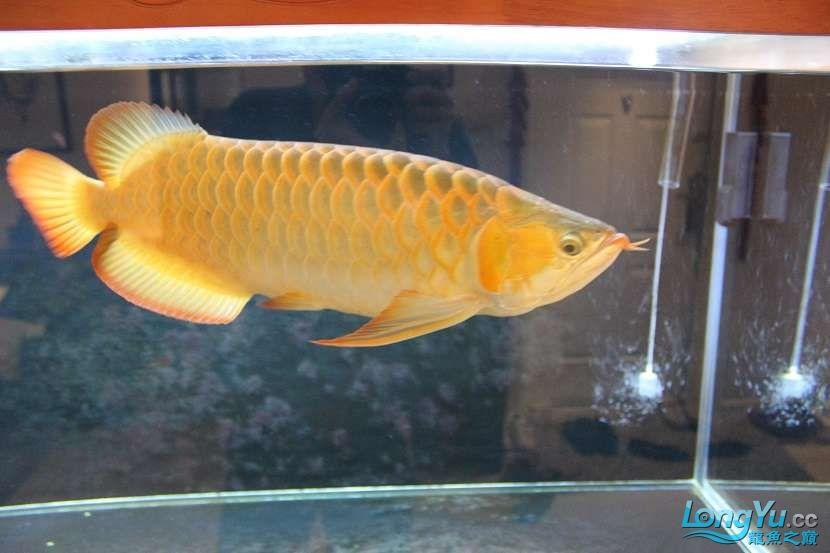 整缸鱼好像都状态不好可能病了 西安龙鱼论坛 西安博特第1张