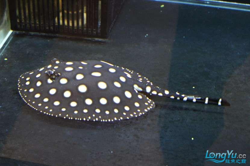 整缸鱼好像都状态不好可能病了 西安龙鱼论坛 西安博特第5张