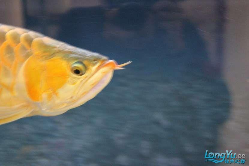 整缸鱼好像都状态不好可能病了 西安龙鱼论坛 西安博特第3张