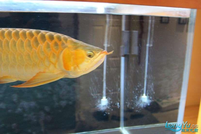 整缸鱼好像都状态不好可能病了 西安龙鱼论坛 西安博特第2张