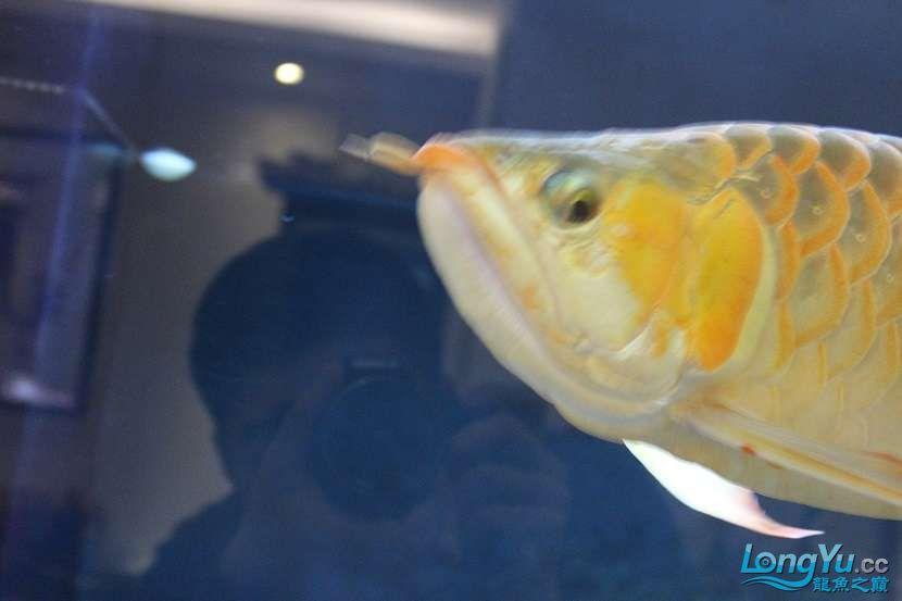 整缸鱼好像都状态不好可能病了 西安龙鱼论坛 西安博特第4张