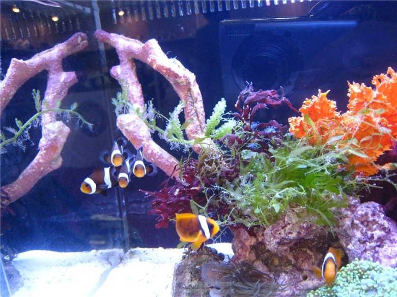 【西安哪家有白子银龙】天热吃点西瓜 西安观赏鱼信息 西安博特第2张