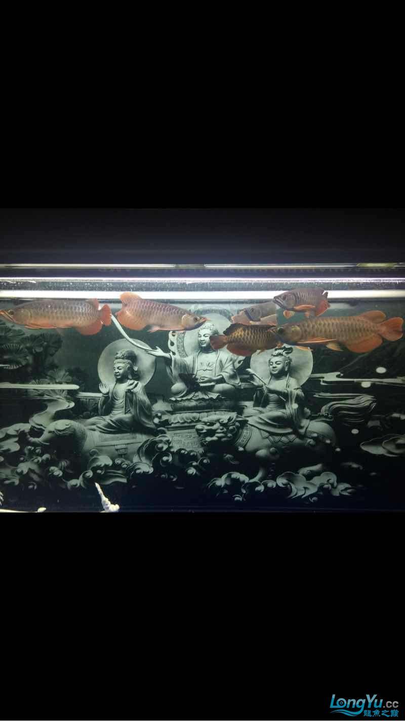 深夜给爱鱼拍几张 西安龙鱼论坛 西安博特第2张